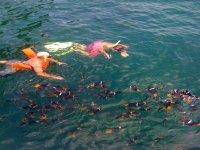 Marine abundance in snorkeling