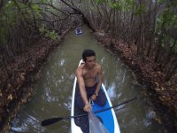 Discover beautiful mangroves
