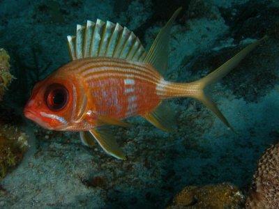 Diving Places S.L de C.V. Pesca