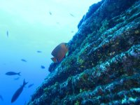 Species in the reef