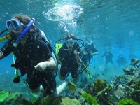 Tour under the sea
