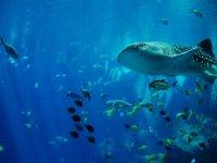 Enamórate de la flora y fauna marina