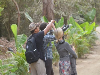 Sayulita Bird Watching Tours