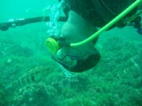 diving in the Pacific