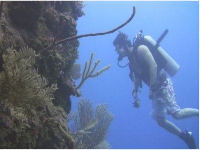 Eco Sonora Divers