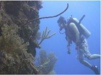 Diving in reef