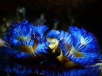 Colores bajo el mar de noche
