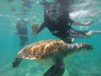snorkeling beach
