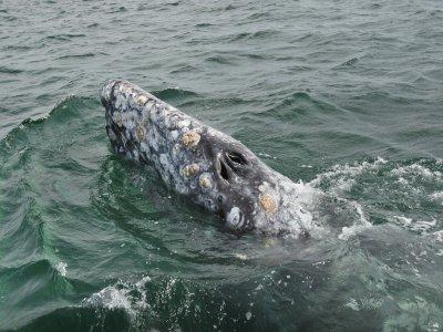 Parasailing Nuevo Vallarta Whale Watching
