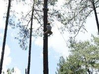Live the adventure of climbing a tree