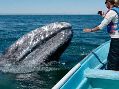 Marietas Punta Mita Whale Watching