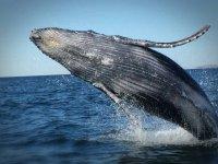 avistamientos de ballenas