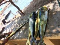 exitosas pescas