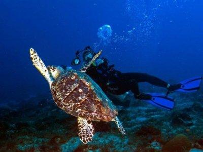 Blue XT Sea Diving