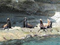 colonia de lobos marinos