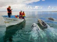 avistamiento de ballenas2