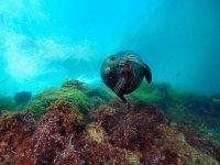 Las Islas Coronado