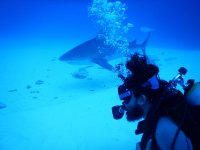 Diving and sharks