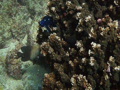Oaxaca Expediciones Snorkel