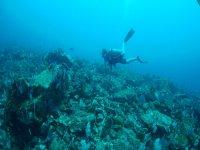 Explorando la vida submarina