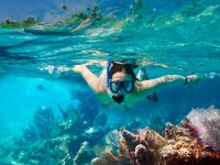 snorkel con ballenas
