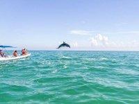 observa delfines