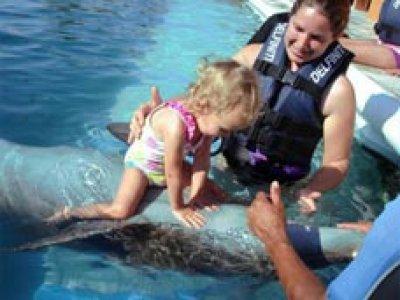 Viaje a México Nado con Delfines