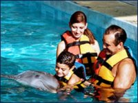 Dolphins in family