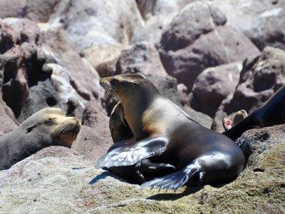 Panterra Eco Expeditions