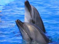 Delfines seres unicos