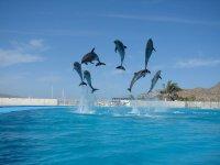 El show de delfines