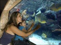 Disfrutando del acuario