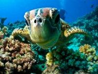 Haz snorkel
