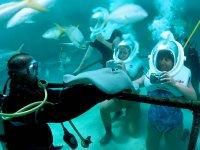 Tocando a las especies en el acuario