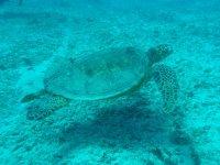 Mira a las especies en el snorkel