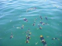 Snorkel con nosotros