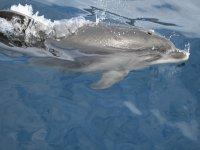 Nadando con esta especie