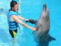 Los delfines conocen la coreografia