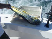 El triunfo de la pesca