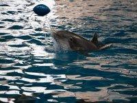 Juega con los delfines