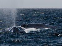 La ballena soltando agua