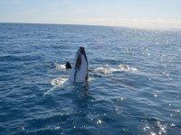 Saluda a la ballena gris