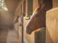 caballos y rutas