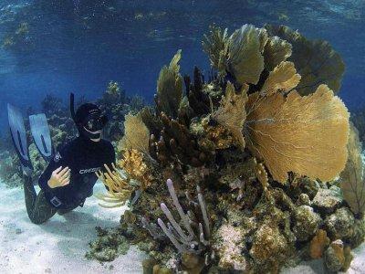 Mahahual Dive Centre