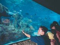 Xcaret aquarium