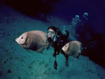 Cozumel Equalizers Buceo