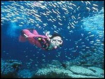 Cozumel Equalizers Snorkel