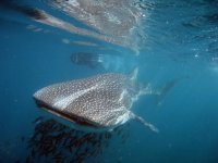 baja california avistamiento cetaceos