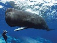 Espectacular y linda ballena