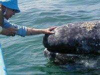 whale watching en Baja